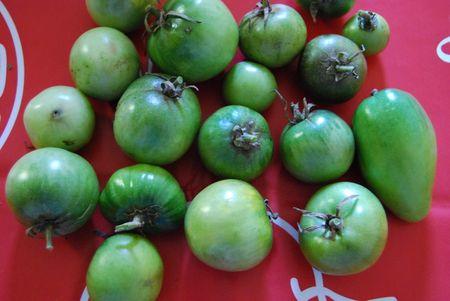 tomates_vertes