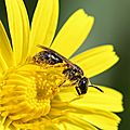 Allergique au pollen ?