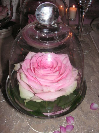table_rose_f_te_des_m_res_002
