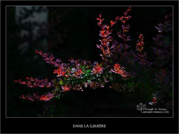 IMG_8413-naturelimages.com