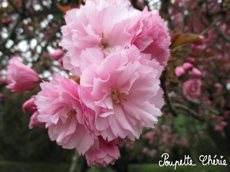 Sakura No Ki 13