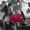 Un poisson dans le bégonia de mémé