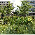 Parc de Billancourt 47