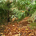 IMG_8957 t