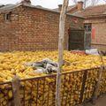 Stockage du maïs