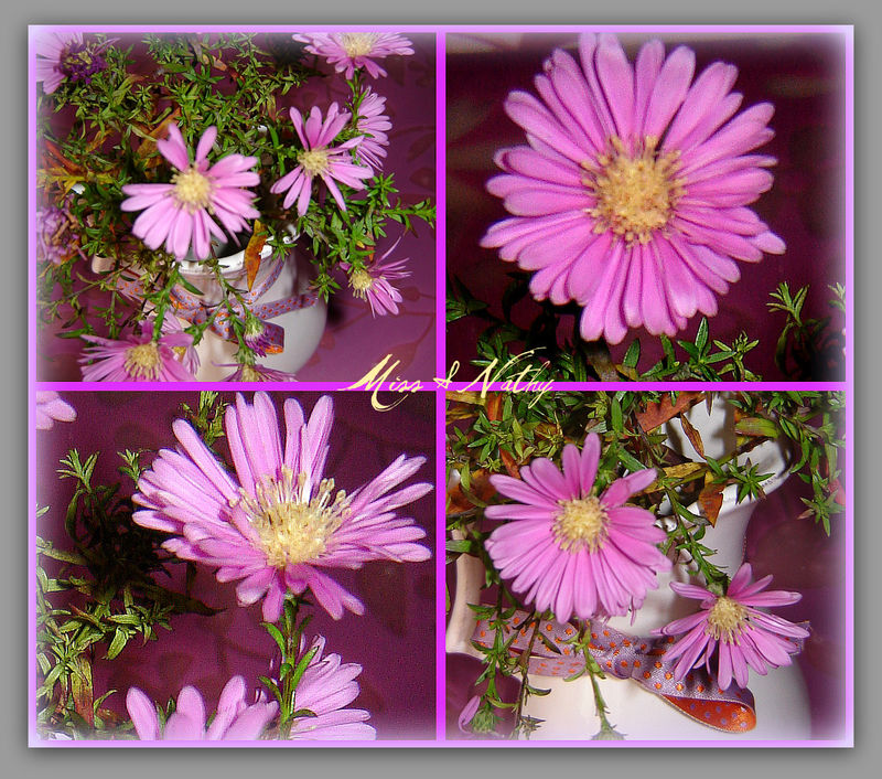 marguerite_collage
