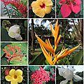 Open-Live-Writer/Vietnam--enfin-_E352/11-fleurs_2
