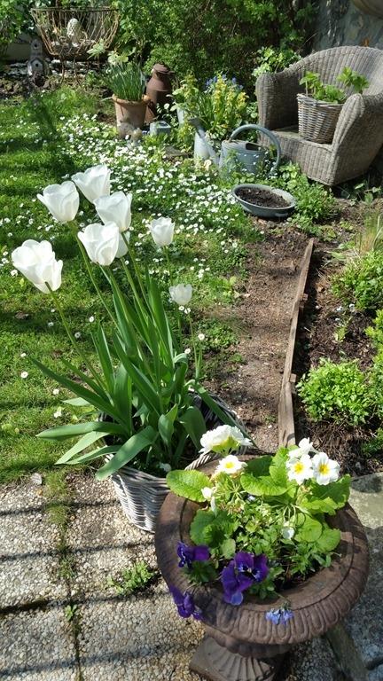 Windows-Live-Writer/Joli-printemps-au-jardin-_601C/20170402_133824_2
