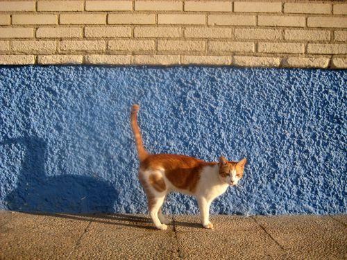 chat Malaga 8