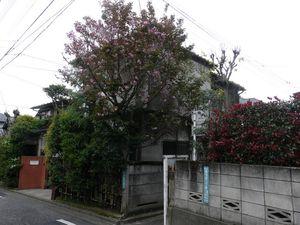 Canalblog_Tokyo03_20_Avril_2010_035