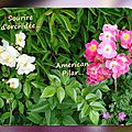 balanicole_2016_02_fevrier_rosiers1_58_sourire orchidee2
