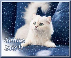 Bonne soirée chat blanc