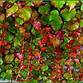 Feuillages automne 0410159
