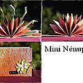 Album Nénuphar