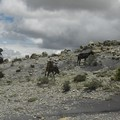 Sur le plateau, petite bergère