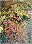 jardin_d_automne_3