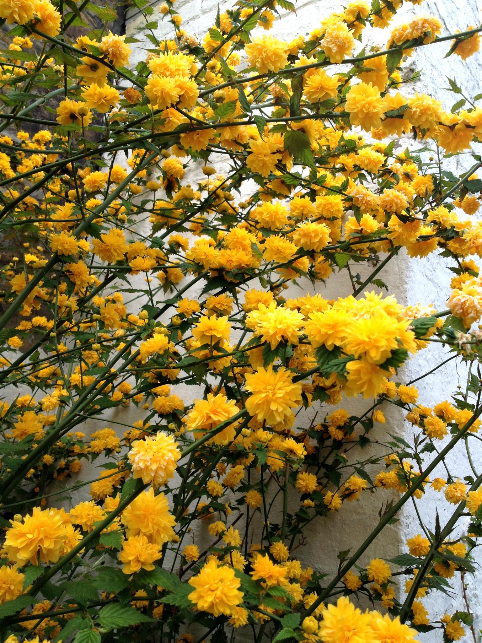 la vie en jaune ...