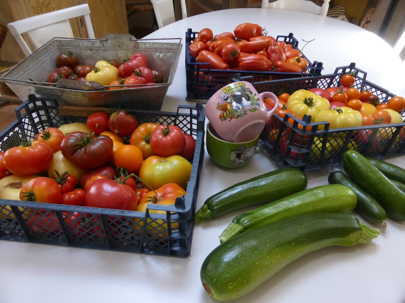 28-courgettes, tomates, concombres (2)