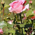 fleure 6 nathalie dentzer
