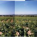 Les vendanges 2009, en Fiefs Vendens