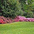 La floraison des azalées au parc de procé