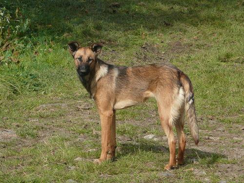 2008 10 13 Kapy le chien