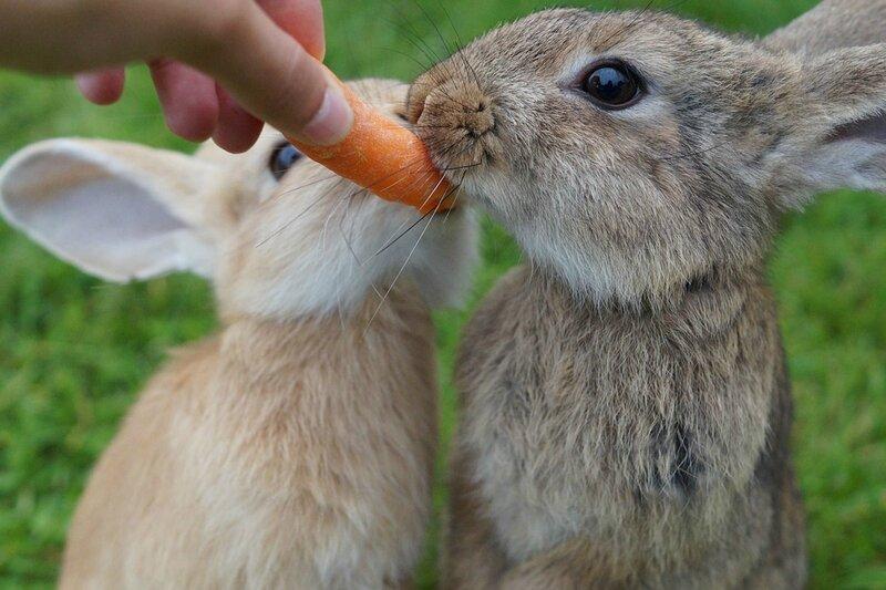 rabbit-Free ThomasG