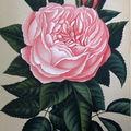 Livre ancien (Le Journal des Roses par Scipion Cochet)