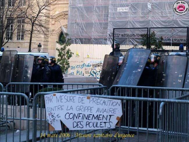 confinement_des_poulets