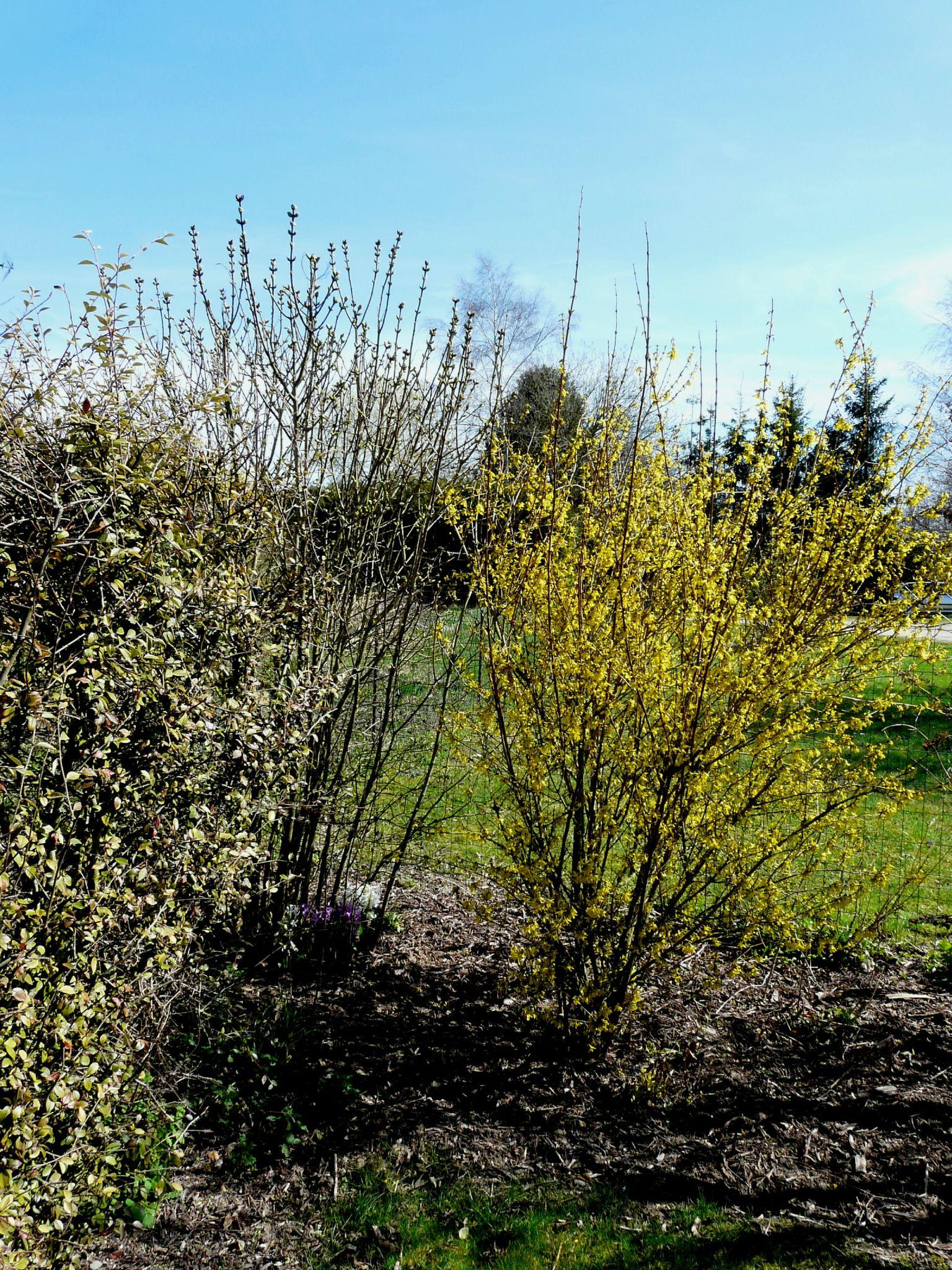 Mi avril les arbres fleuris du jardin le jardin de for Les arbres du jardin