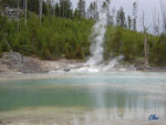 18_Jun_04___Yellowstone__Norris_geyser_basin_10