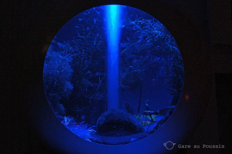Indigo aquarium