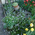 356 - toujours les floraisons d'avril
