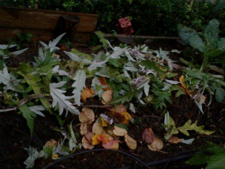 00031237 paillis vert et feuilles