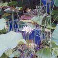 jardin Pamplemousse_26