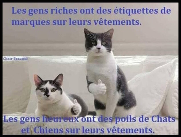etiquettes_ou_poils_de_chats_chiens