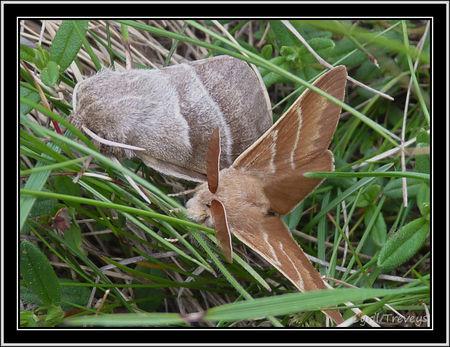 2010_06_01_Deux_papillons__2_