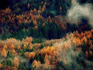 autumn-beautiful-fog-forest-mist-Favim
