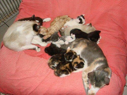 2008 04 15 Papillon et Blanco avec tous leurs chatons