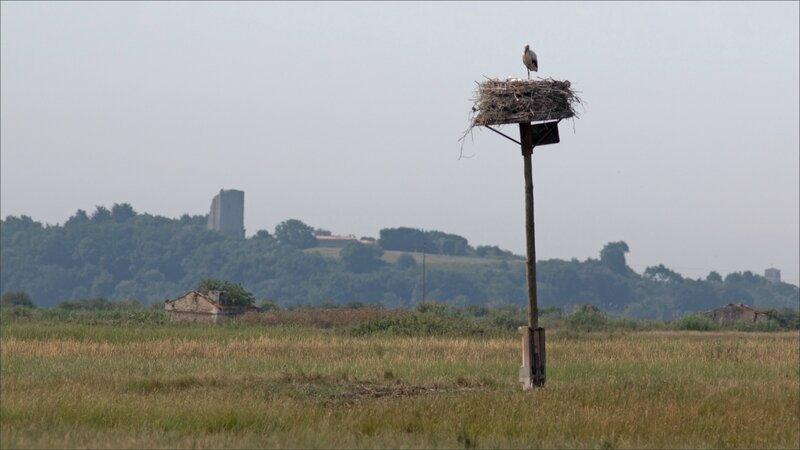 MS oiseau cigognes nid Tour de Broue 140617