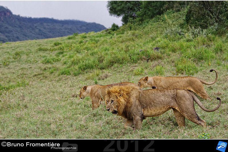 Lion 800e