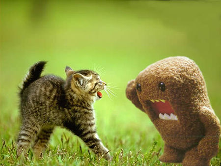 cat_vs_domokun