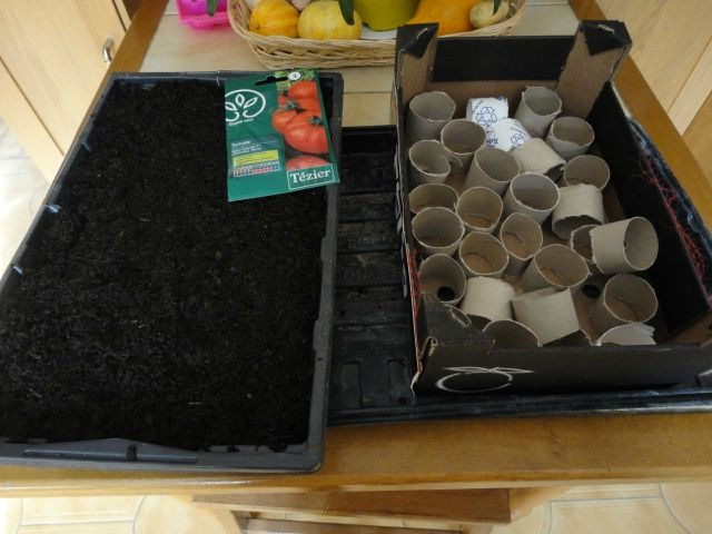 Semis de tomates les gens du jardin - Faire des semis de tomates ...