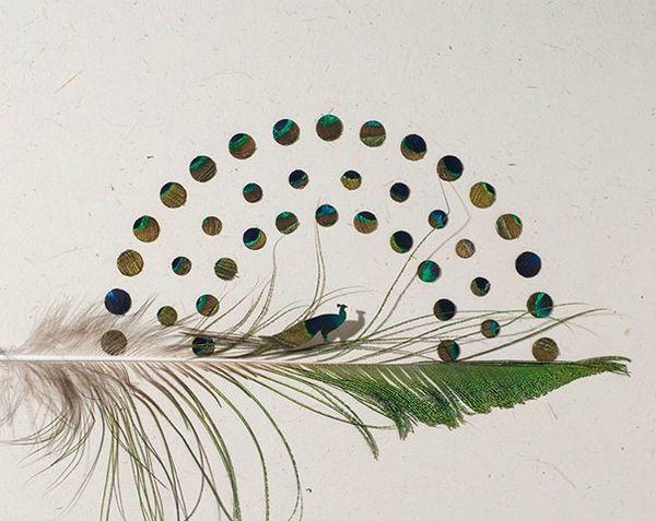 Art-avec-des-plumes-doiseaux-Chris-Maynard-photo-08