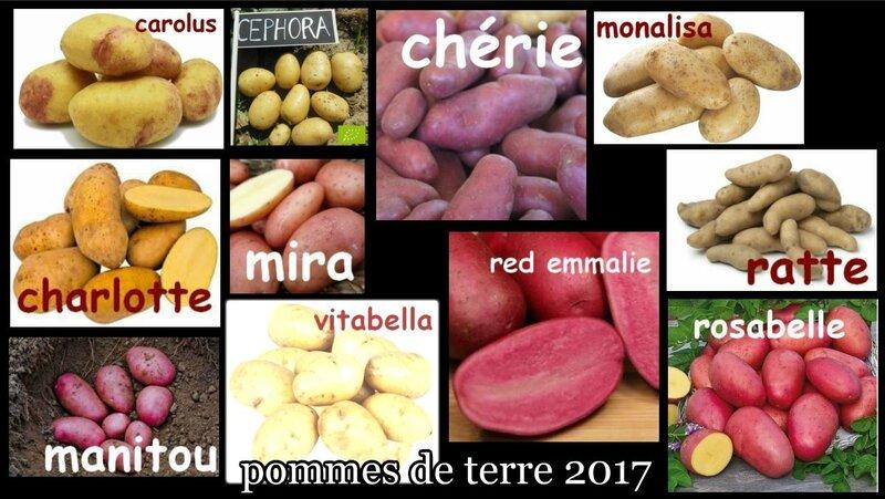pommes de terre 2017
