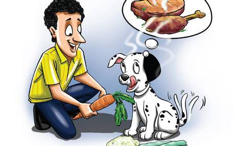 lifestyle-for-pets