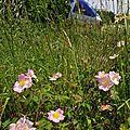 AGC dans le vent des fleurs de printemps