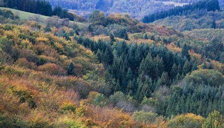 paysage_montagne_bourbonnaise_couleurs_automne