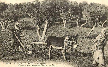 femme arabe trainant la charrue