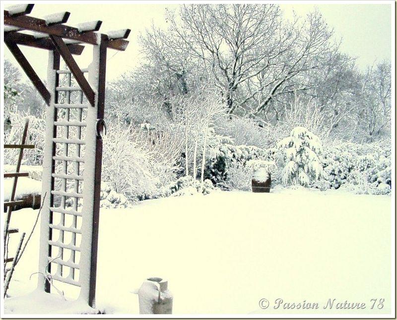 Notre jardin en hiver (14)